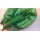 Malla tegida para calabacín, pepino y pimientos
